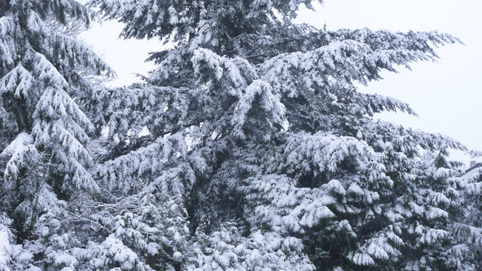 Snow2_20Dec13