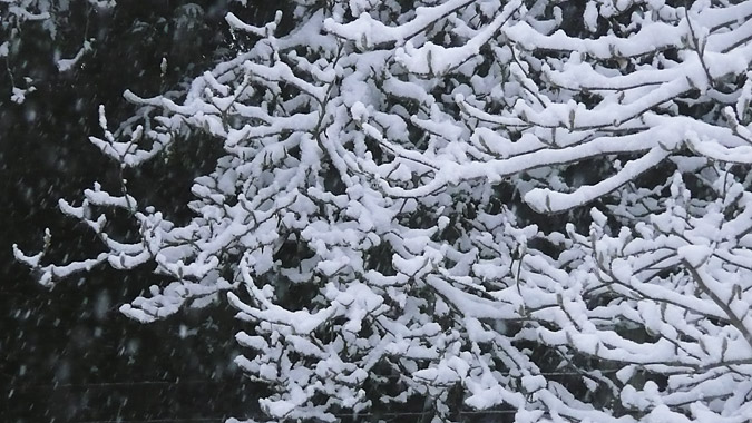 Snow3_20Dec13.
