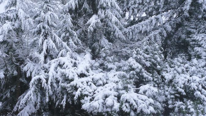Snow_20Dec13