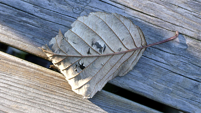 leaf_on_deck_Dec2013