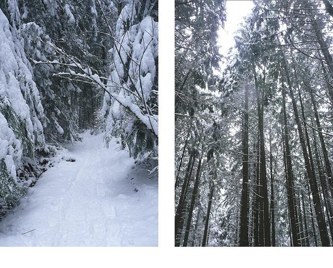 SnowHike23Feb12