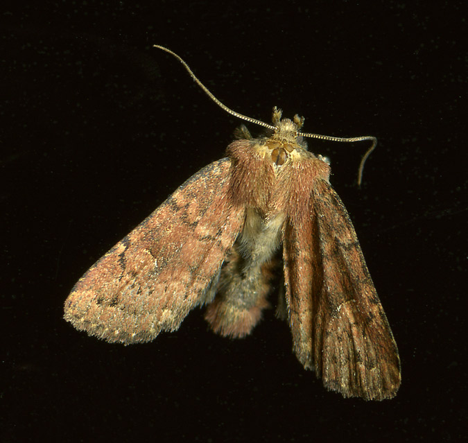 moth_top_3July14