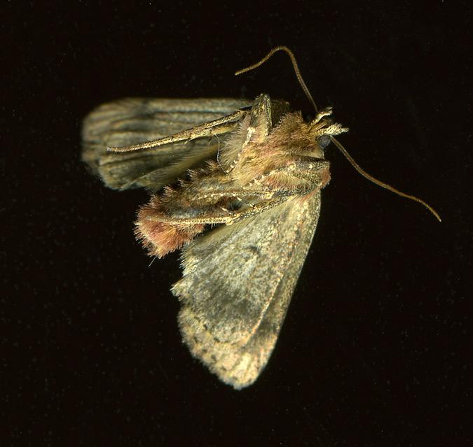 moth_under_3July14
