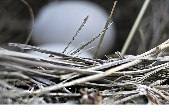 Nest4714
