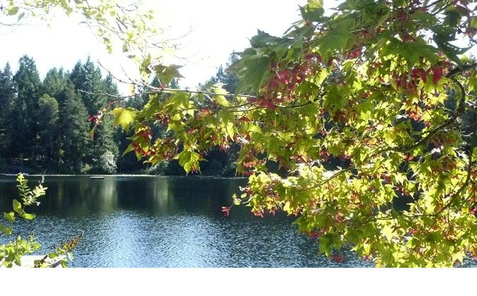 Autumn_LoonLake