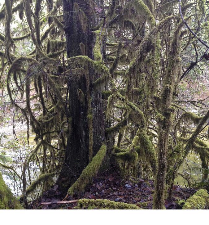 FRathje_rainforest1
