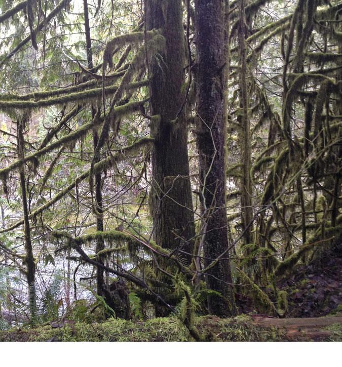 FRathje_rainforest2