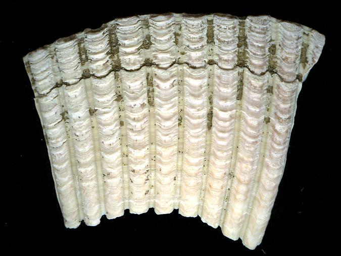 ShellFragment