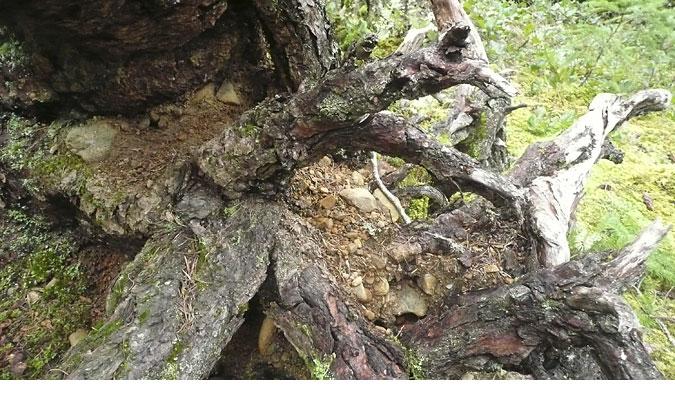 rainforest-creature862