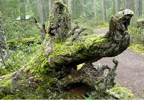 rainforest_creature864