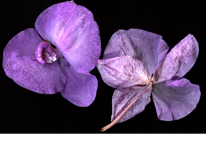 VioletOrchid