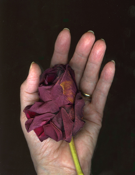 Hand-with-Rose_2