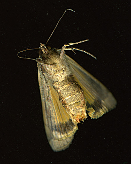 Moth_underside_aug16