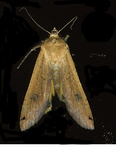 moth_backaug16v2