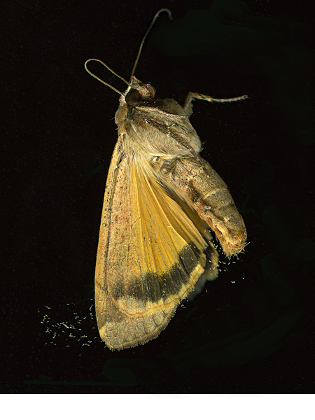 moth_sideview_aug16v2